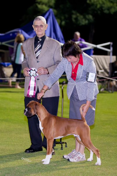 GEORGE 9 MONTHS.- PUPPY IN SHOW UNDER BOXER SPECIALIST MR KEVEN HARRIS