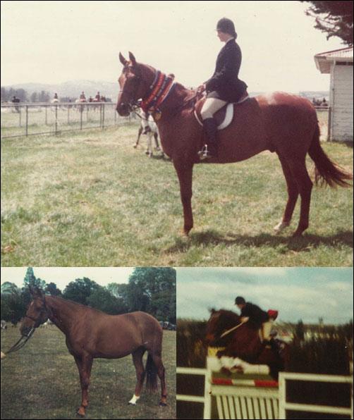 TASWEST-D1-HORSE
