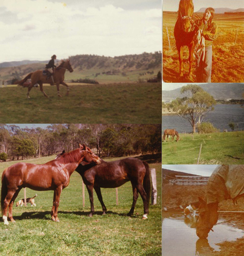 TASWEST-D3-HORSE