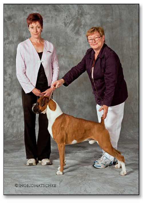 "DALLAS IS A MULTI BEST EXHIBIT IN SHOW (ALL BREEDS) WINNER"" width="